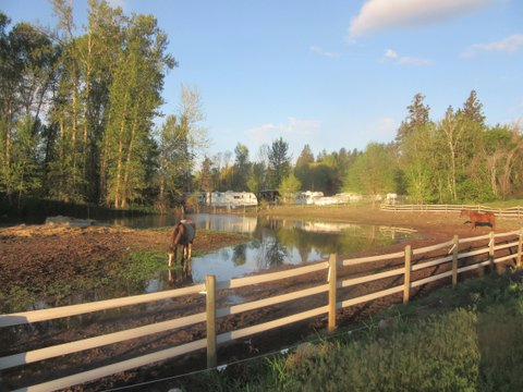 HORSE PASTURE FLOODED